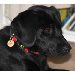 Sammy form Holland with her new Red Rose Dog Collar Design