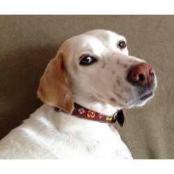 Colored Flower Dog Collar showed by Pretty Dog Wilma from Germany