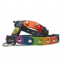 Rainbow Dog Harness with the Freedom and Liberty Colors