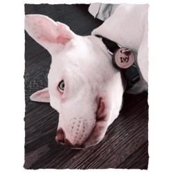 Luxury Design Wooden Dog Tag with Name and Telephone number – Nicely Shown by Model Ivy from Holland