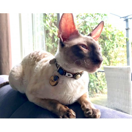 expo who is a cornish rex shows his new cat collar design and cat tag