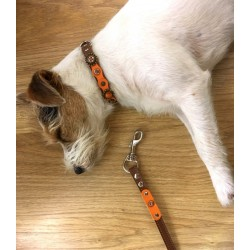 Parson Terrier Narcisse dreaming about her new Dog Collar with Matching Lead