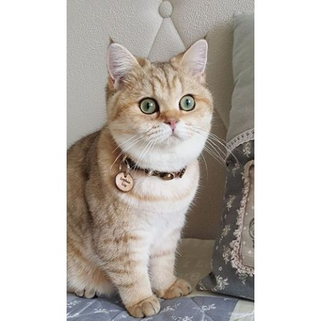 cat sophie showing her designer cat collar with wooden cat tag