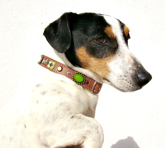 "In this category ""Kumpel"" for small dogs you can buy your own designer personalised leather dog collar."