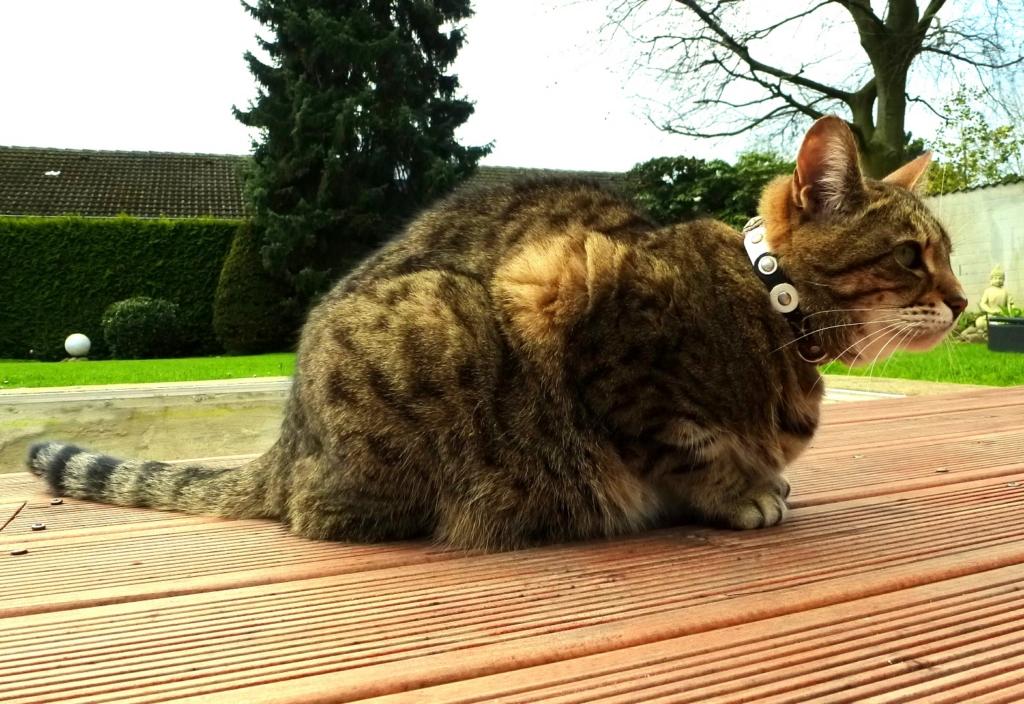 Design Voor Katten : Design voor katten