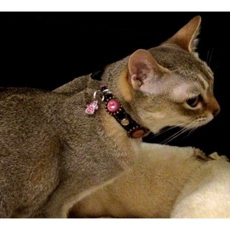 Singapura MiMi from Austria with her Luxury Cat Collar with Pink and Purple Leather and Strass Stones