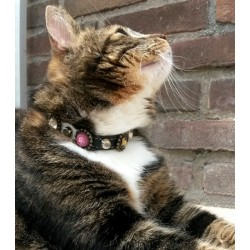 Bling Katzenhalsband - Hier Model Proud aus Holland