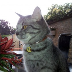 Pip from Holland Cats with Original Offbeat Leather Collar Design