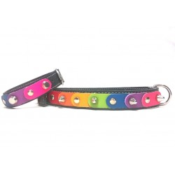 Unique Rainbow Dog Collar and Matching Bracelet with the Freedom Rainbow Colors