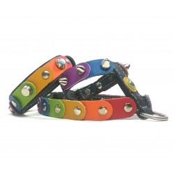 Unique Rainbow Dog Harness and Matching Bracelet with the Freedom Rainbow Colors