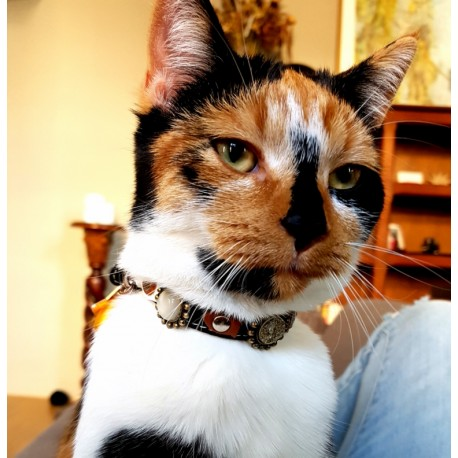 Breakaway Cat Collar - Beautiful Design Showed by Coco from Holland