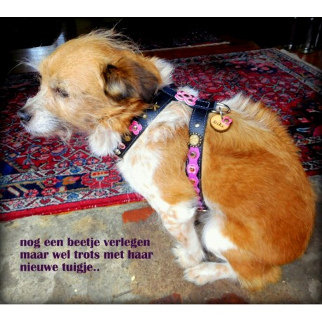 Niki from Holland with her Beautiful Luxury Dog Harness with Pink and Purple Big Leather Flower