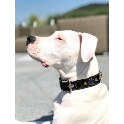 Beautifully chosen Dog Collar Design on Ninja who is a four Month Dogo Argentino