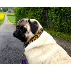 Tucker the German Pug with his new Design Dog Collar