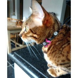 Luxury Cat Collar design with leather fuchsia flower shown by Romy