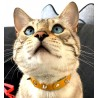 Basil showing his Yellow Leather Studded Cat Collar Design