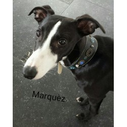 Marquéz from Holland with His widths Leather Fashion Stylish necklace - Design Mar