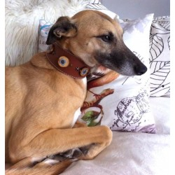 Flash from Holland with his Original wide Brown Leather Dog Collar with Flowers stars and wooden discs
