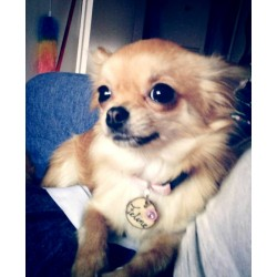The Pretty Feline from Germany with her new olive wooden Dog tag